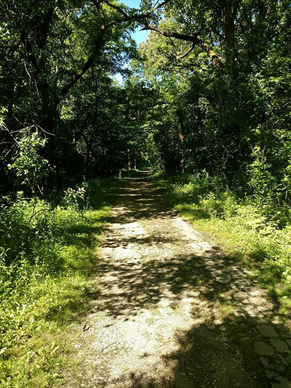 Bachelors Grove Path